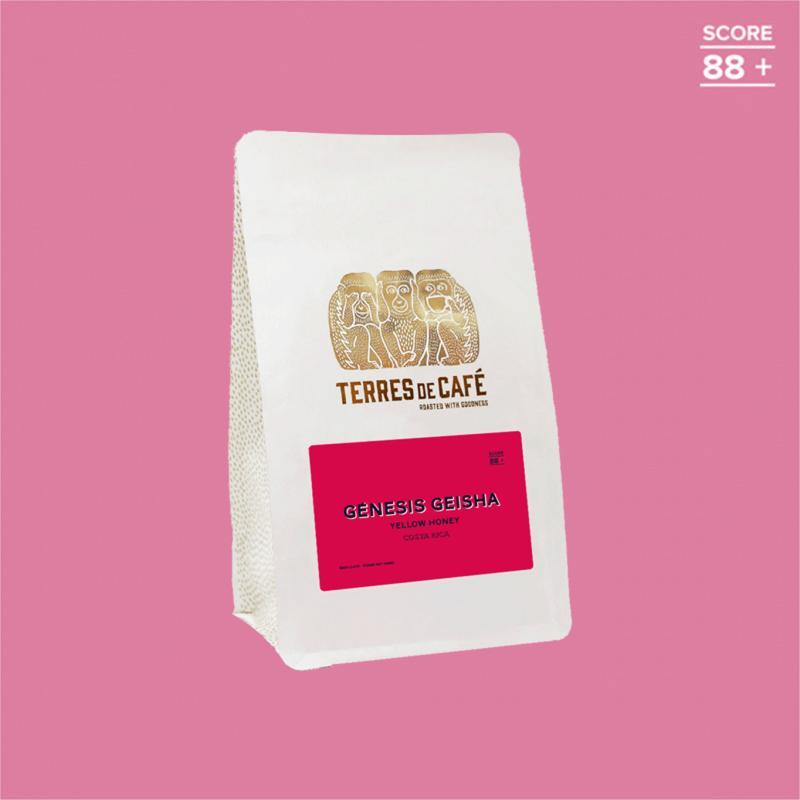 Specialty coffee in beans or ground   Geisha Genesis Yellow Honey    Terres de Café