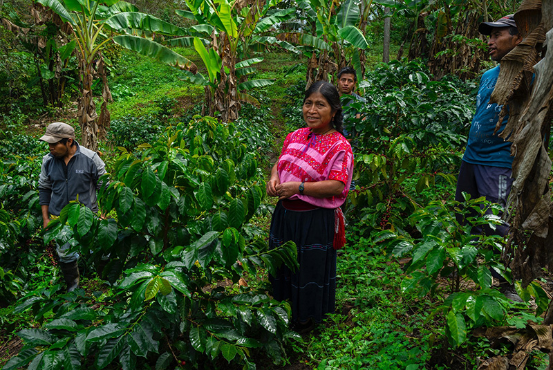 Famille Vasquez Santíz dans sa plantation