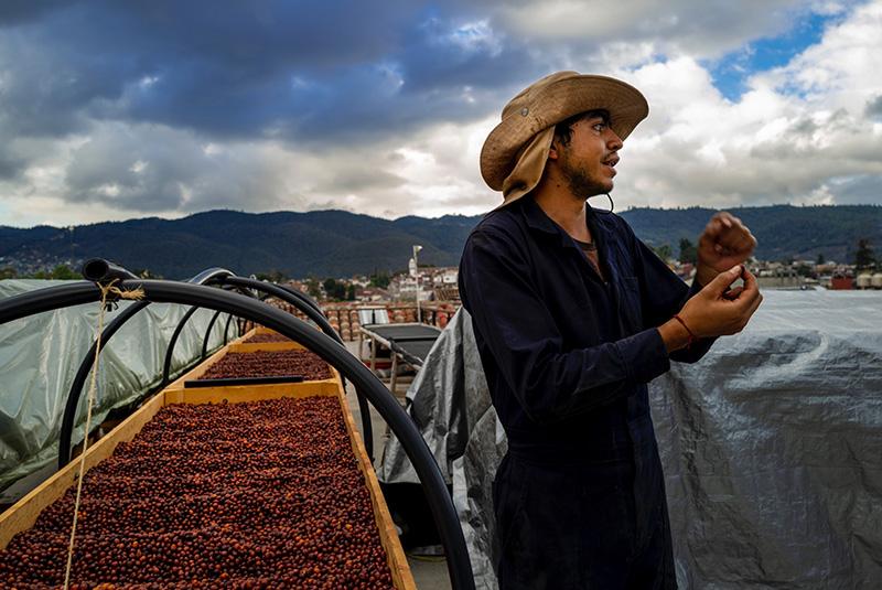 Lits de séchage des grands crus sur le toit de l'Hotel Casa Cafeologo