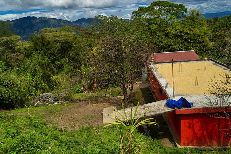 Village de Sibactel. Séchage du café en parche sur les toits des maisons Maya.